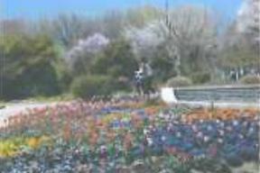 ピッピとピコの花を巡るコース