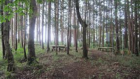 小倉山御嶽里山楽園コース
