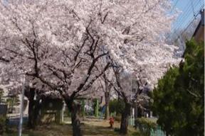 ヘルスおりひめウォーキングマップ② ~櫻コース春のおすすめ(袋川沿い)~