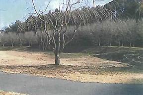 ウォーキングトレイル(桜並木)