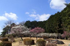 花の丘・大池