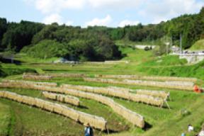 石畑の棚田