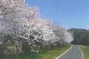 ウォーキングトレイル(桜づつみ)